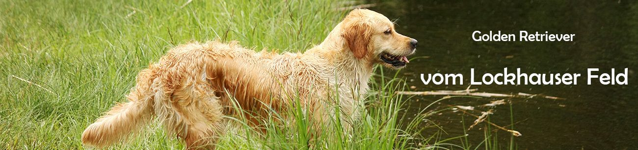 "Golden Retriever ""vom Lockhauser Feld"""